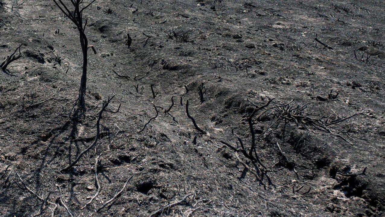 Incendio forestal en Ames.Imagen de una zona afectada por un incendio forestal registrado esta semana en un municipio ourensano