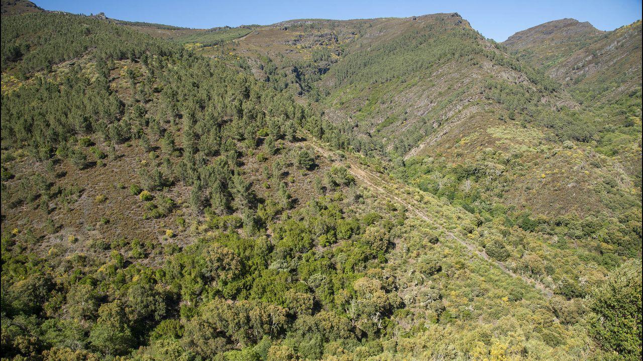 La maleza cubre la zona conocida como Os Colmeares, donde se extraía el mineral de hierro