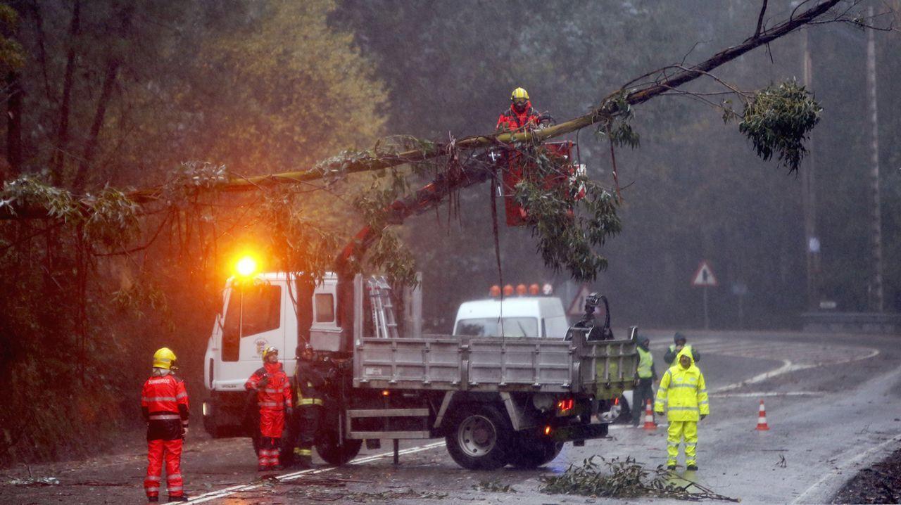 Decenas de árboles cayeron sobre el tendido electrico. En la imagen, Mos