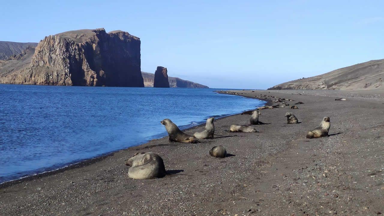 Leones marinos en la playa de isla Dececpción