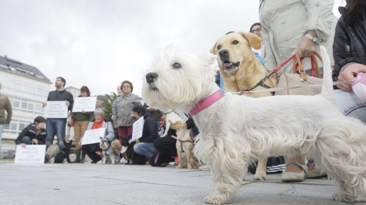 Rostros conocidos se apuntan al «banco bueno».Imagen de archivo de una concentración pidiendo parques para perros en Viveiro, donde están censados 3.267 animales de compañía; la mayoría, canes
