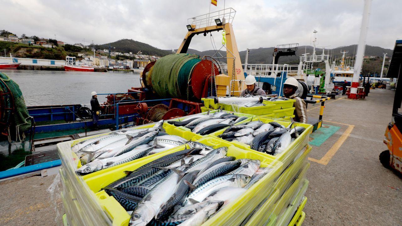 Barcos de altura y de litoral, como este arrastrero de litoral que descarga xarda en el puerto de Celeiro, continúan faenando para garantizar el suministro de pescado fresco, igual que gran parte de la flota de bajura