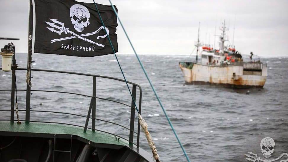 Percebe percebes.Un barco ecologista persiguiendo en aguas tailandesas a un buque dedicado a la pesca ilegal de merluza