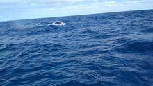 La majestuosidad de cuatro ballenas a solo unos metros