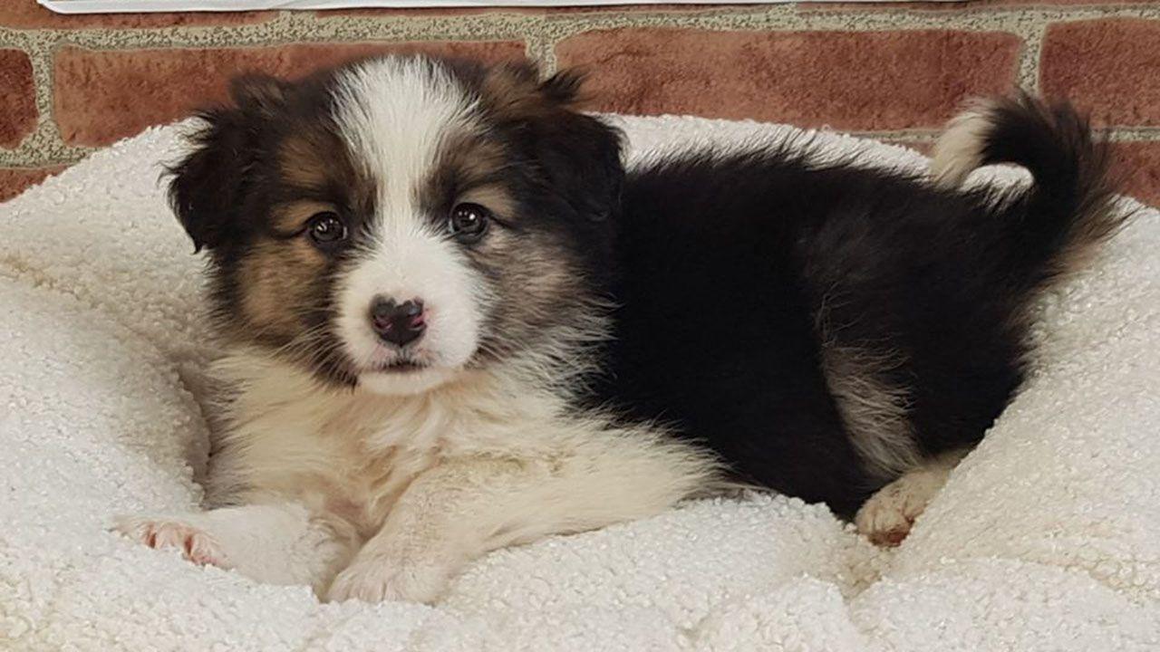 Carla, la cachorra encontrada en Colloto, ya tiene un nuevo hogar
