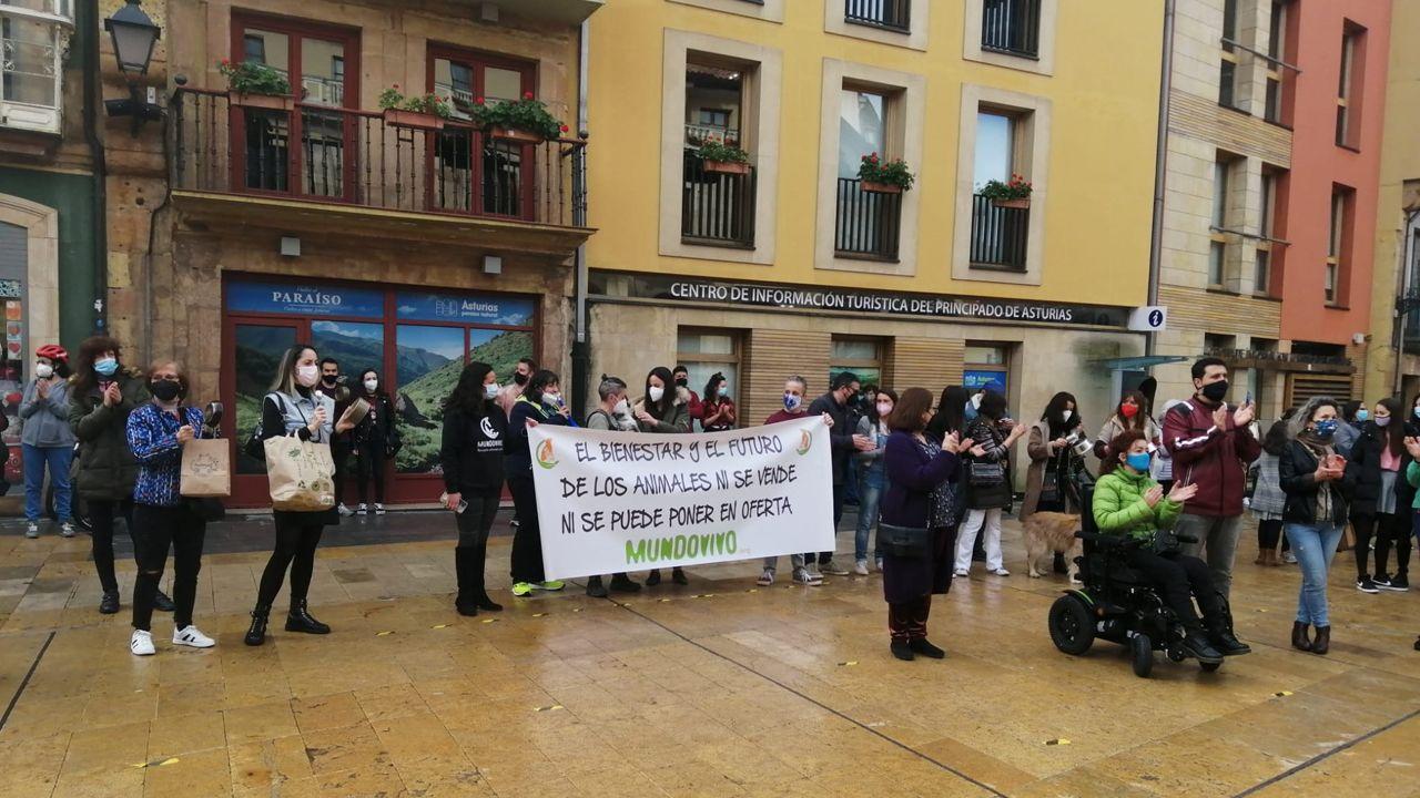 Cacerolada por la gestión del albergue de animales de Oviedo, este domingo