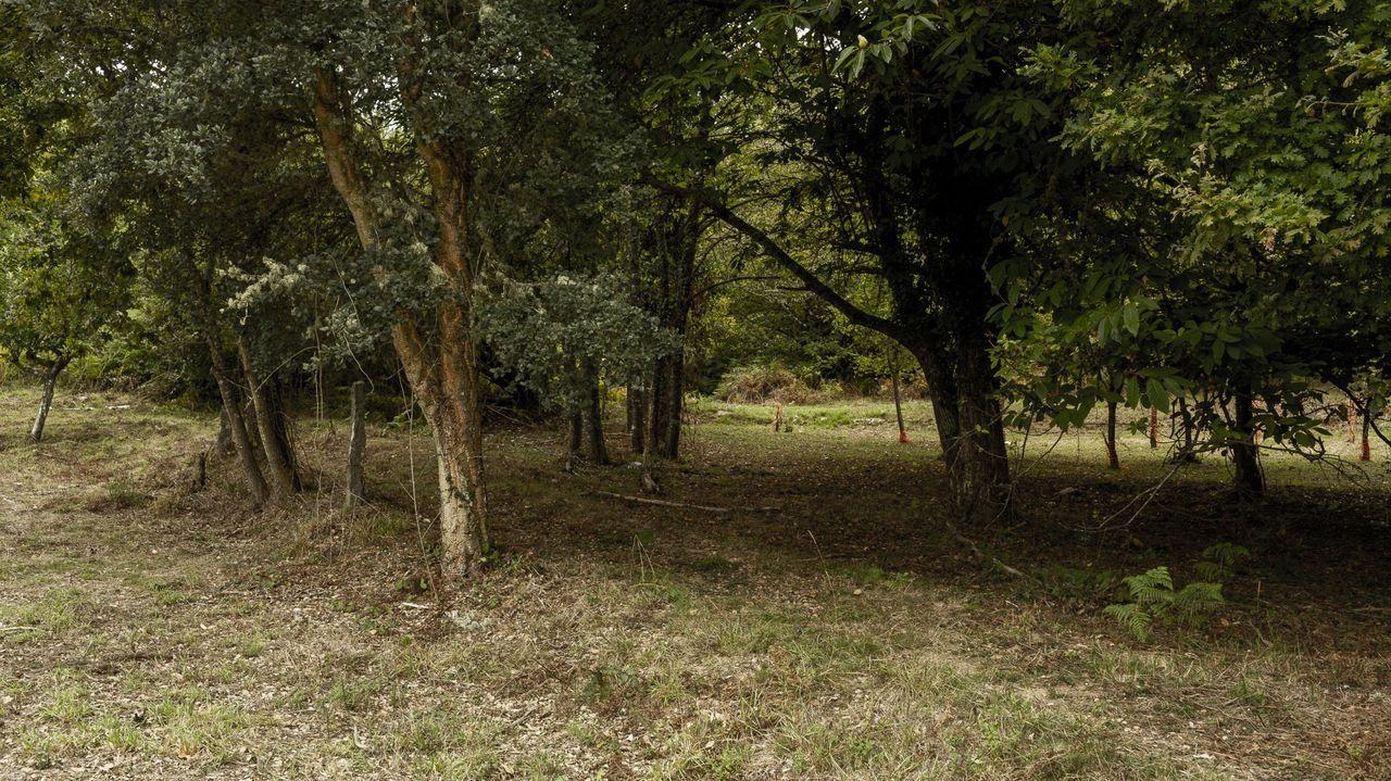 Imagen de una de las parcelas recuperadas en la aldea modelo de Trelle