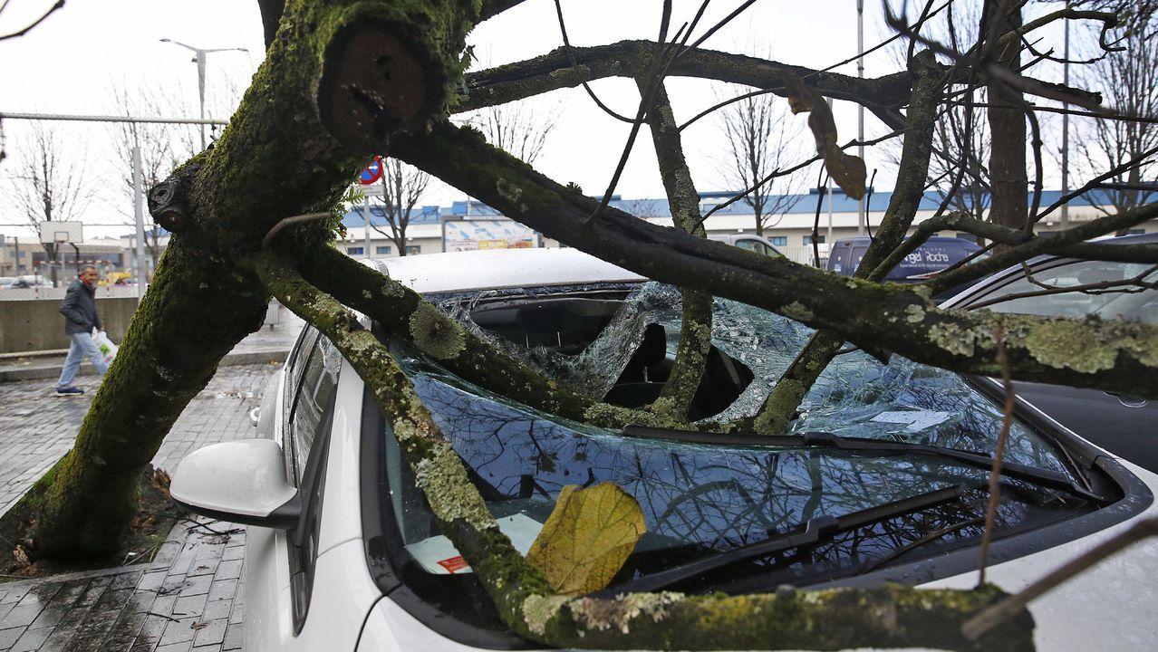Un árbol daña un coche en O Berbés tras caer por el temporal