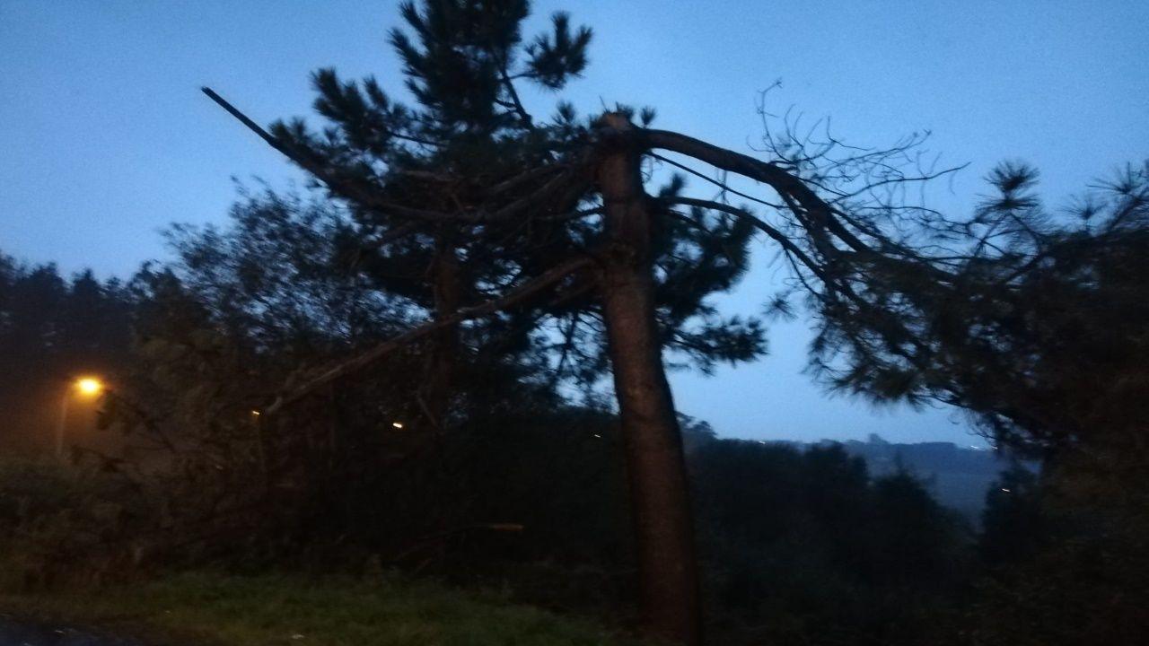 Caen dos árboles en la carretera AC-552.Pancarta de Un pulmón para el «solarón»