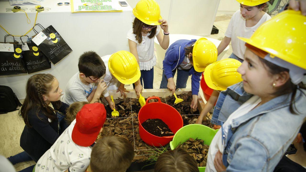 Piteas crece por la Galicia interior