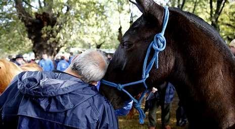 Unas trece mil personas se acercaron hasta la carballeira de Francos para comprar, y sobre todo, disfrutar con los caballos.