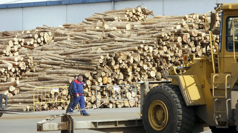 """""""El sector forestal podría ser el segundo motor económico de Asturias"""""""