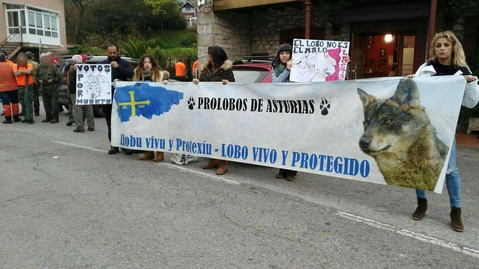 Lobo abatido.Activistas en defensa del lobo se manifiestan junto a una batida en Illas