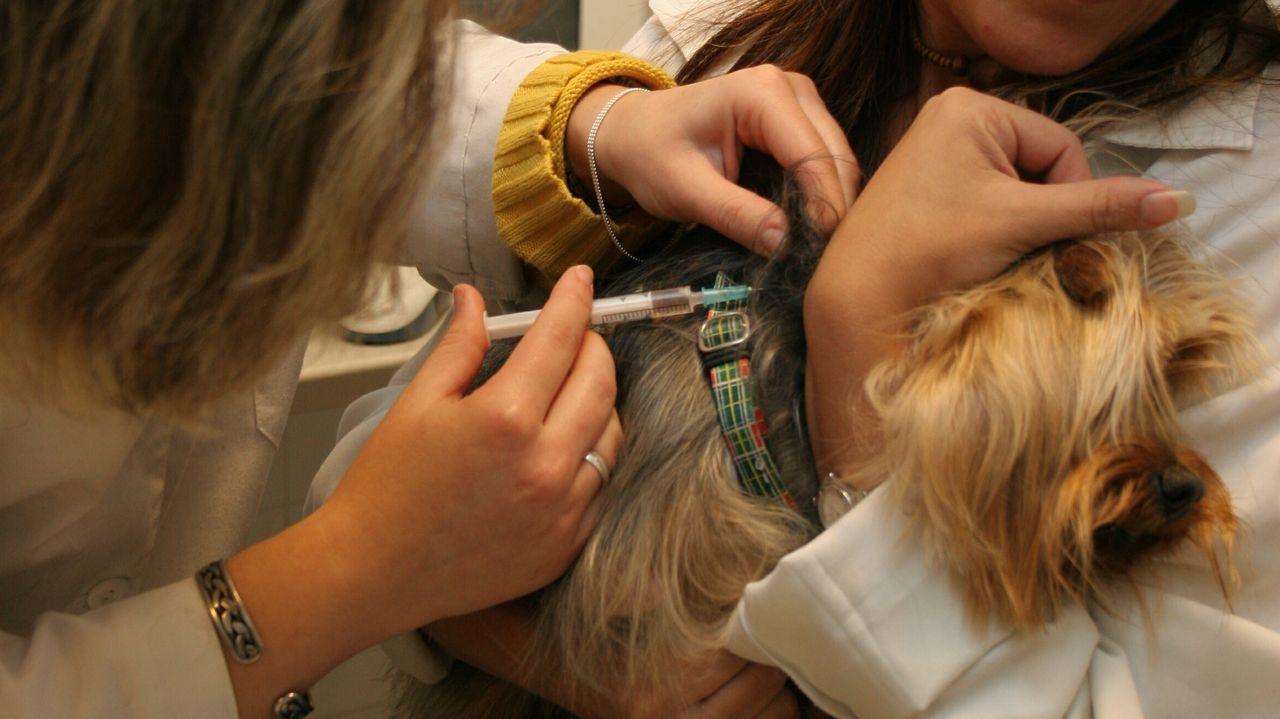 Vacunación de un perro en una clínica veterinaria, en una imagen de archivo
