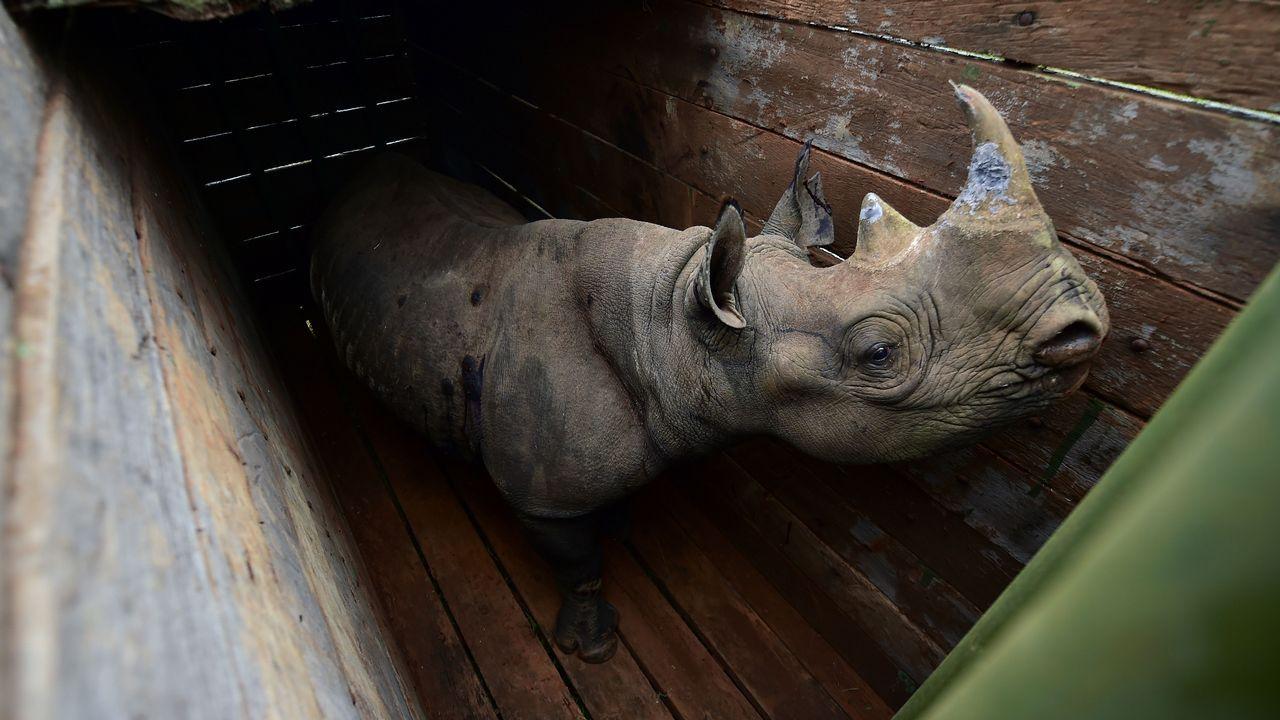 Un ejemplar de rinoceronte blanco, en el Parque Nacional de Nairobi