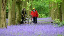 Dos personas con mascarillas caminan entre campanillas en el bosque de Waltham, cerca de Londres