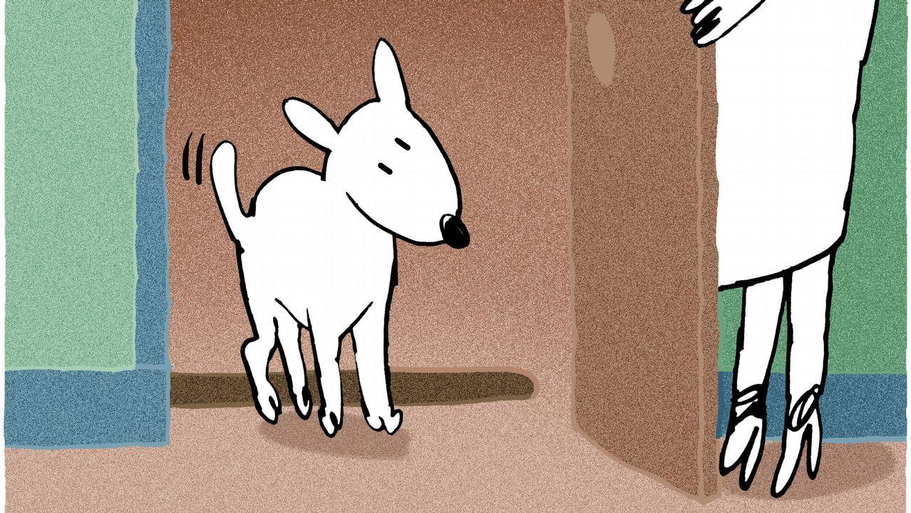 La protectora de Vilagarcía recibe 20 cachorros abandonados en una semana.Estado en el que se encontraba el caballo agonizante hallado por la Guardia Civil en Pravia