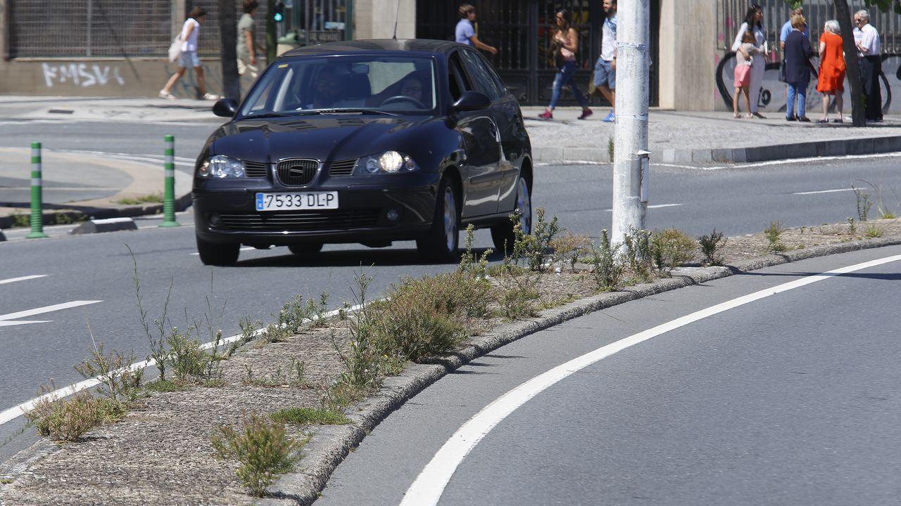 La jungla en el asfalto.Hierbajos en las aceras de A Coruña