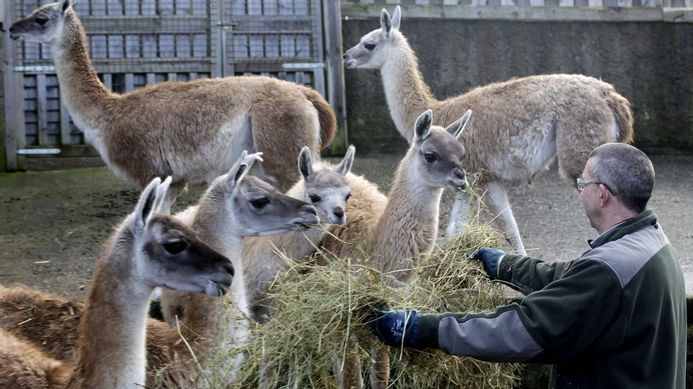 Cinco lugares en Galicia en los que entrar en contacto con los animales.Julio Alberto Seoane  y su hija Ariadna, en las instalaciones que disponen en Mosteiro (Meis).