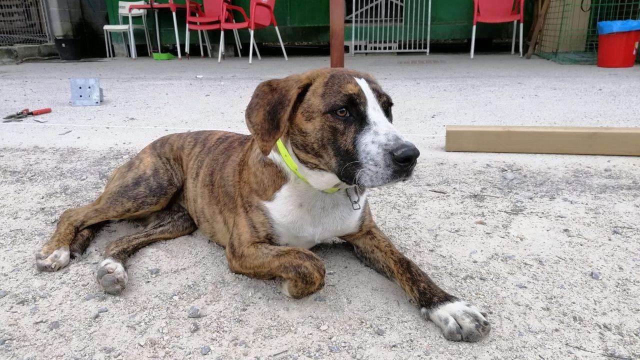 Kira es una perra que está en adopción en la protectora de Animales de Oriente
