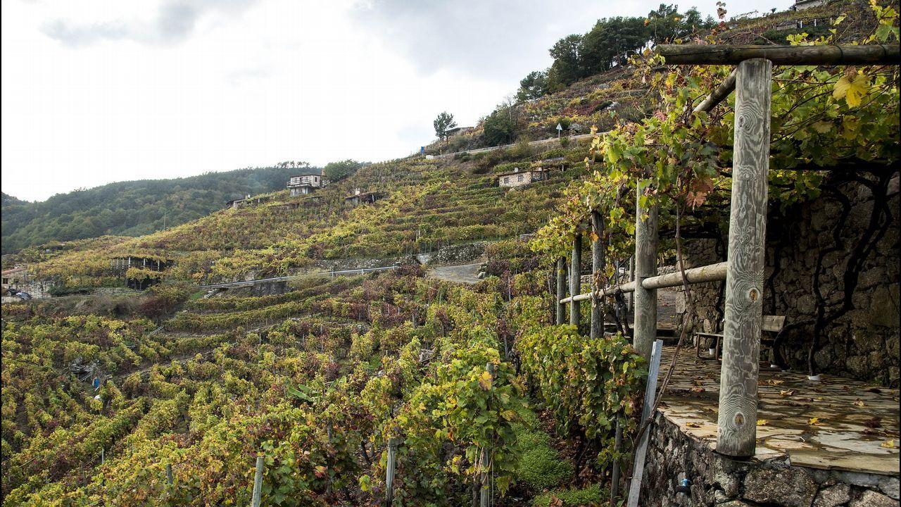 Viñas pintadas de diversas tonalidades en Chantada