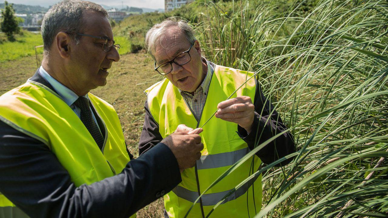 Castro de Coaña.El catedrático Tomás Emilio Díaz muestra la planta del plumero de la Pampa al consejero de Infraestructuras, Ordenación del Territorio y Medio Ambiente, Fernando Lastra.