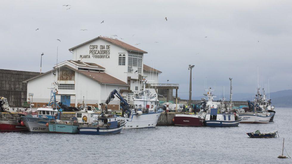 Refugios de pesca y áreas recreativas de la Costa da Morte: entre la ruina y el esplendor.La de Malpica ha sido la lonja que más xarda ha vendido en estas jornadas