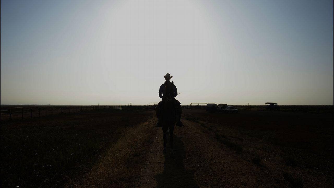 Un hombre cabalga durante la Saca de las Yeguas, en el Parque Nacional de Doñana