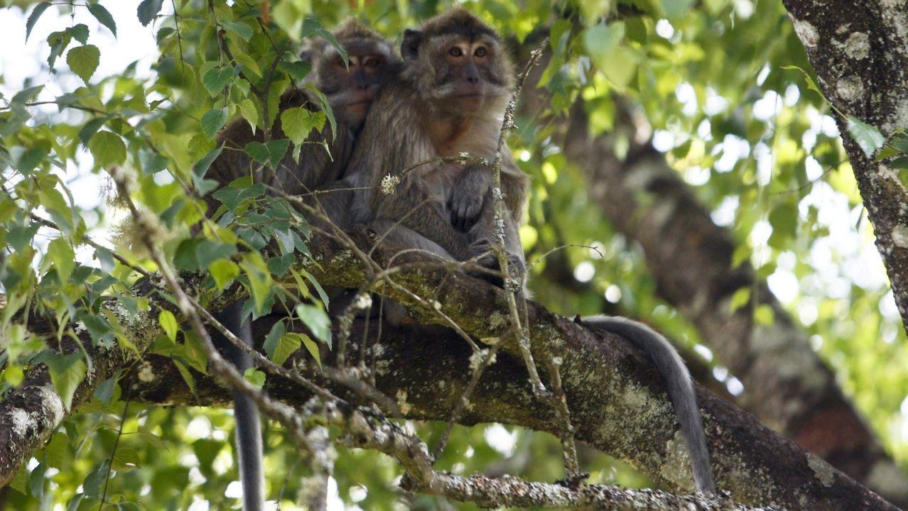 Estas son las mejores zonas fluviales de Lugo.Macacos en el zoo de Marcelle