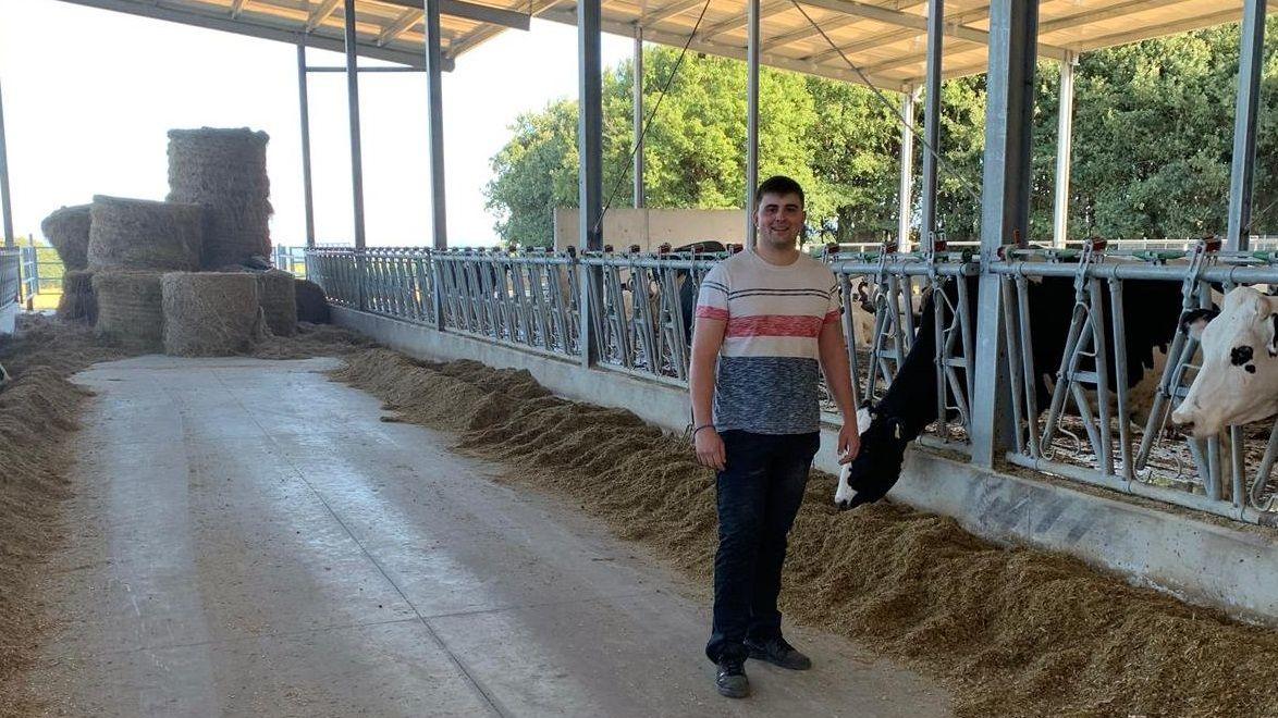 Un vaca en Asturias
