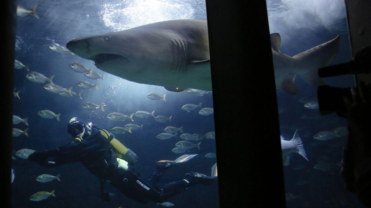 La AC-12 comienza a perder carriles por las obras en el cruce del Sol y Mar.El tiburón Gastón, en la Casa de los Peces.