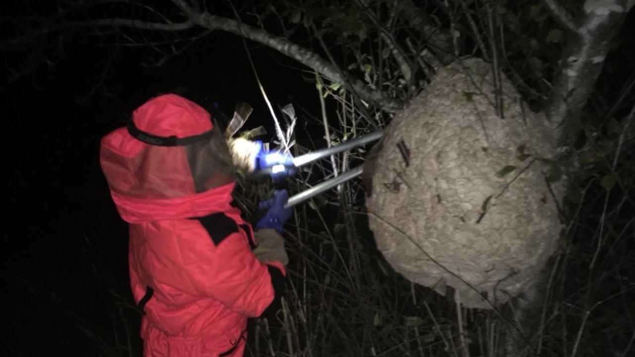 Retiran un enorme nido de velutina en Coirós