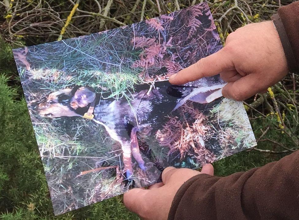 José Luis Caramés.José Antonio muestra una foto de su perro en el lugar donde lo mató el lobo.