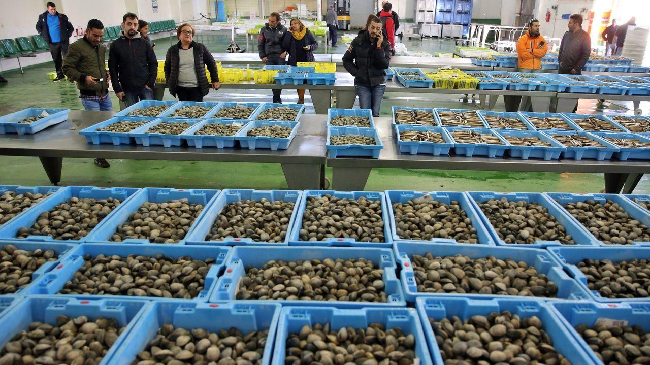 Siembran 35.000 erizos de acuicultura en dos bancos naturales de A Coruña