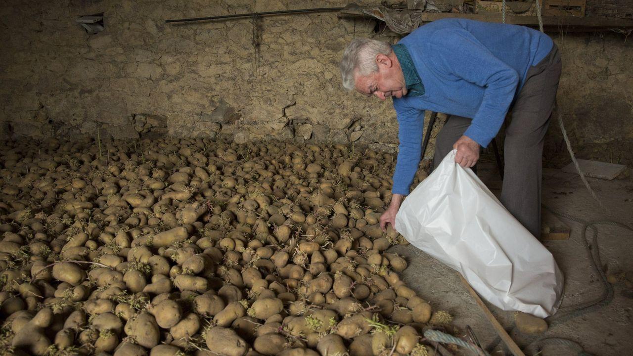 Foto de archivo de un vecino de Muxía que en su día tuvo que entregar las patatas por estar afectadas por la couza