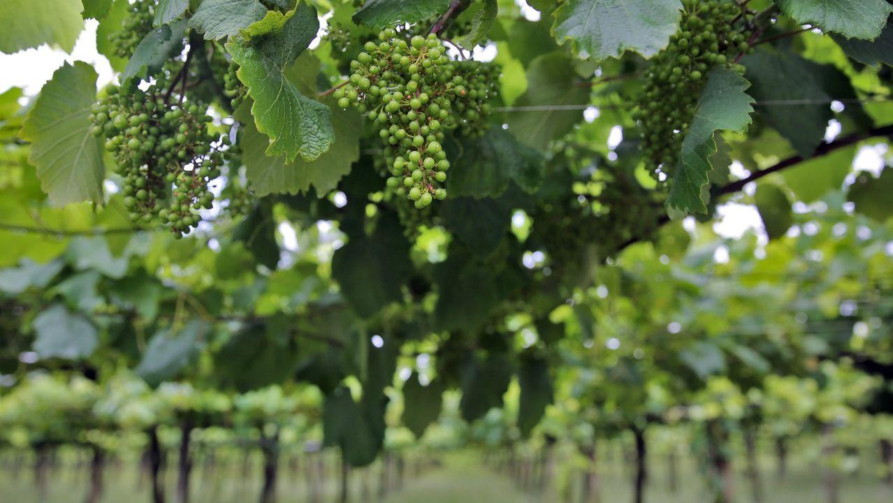 Los peones para recoger uva empiezan a escasear