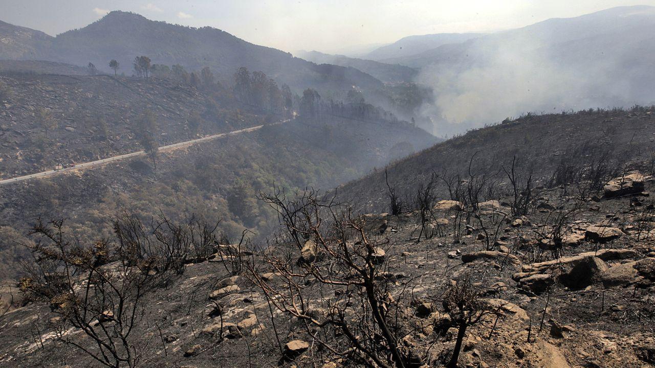 Portugal prohibe usar el eucalipto para replantar áreas quemadas como la de la imagen
