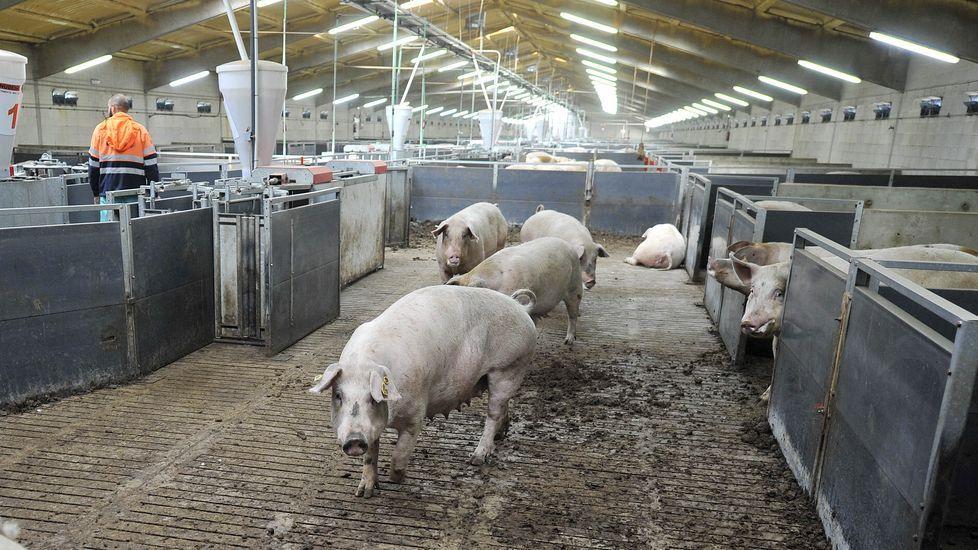 Imagen de archivo de carne de caballo en una carnicería