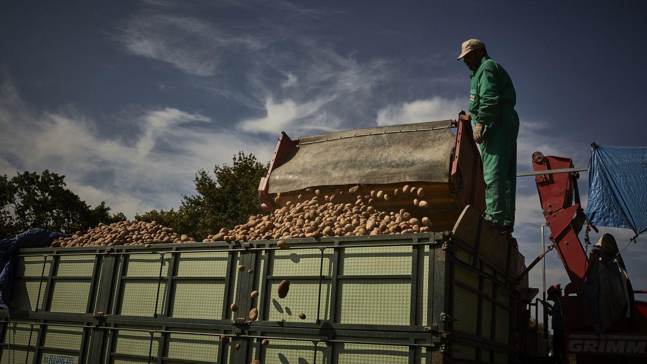 Empieza la recogida de la patata de A Limia.Un potro muerto por el ataque del lobo en la sierra de A Capelada, como denuncian los vecinos