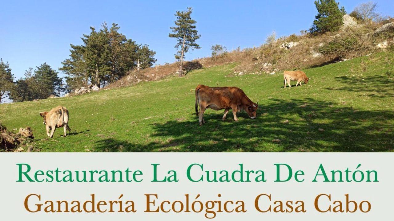 Ría del Eo.La Cuadra de Antón cierra definitivamente. Su dueña se dedicará a la gestión de la ganadería ecológica Casa Cabo