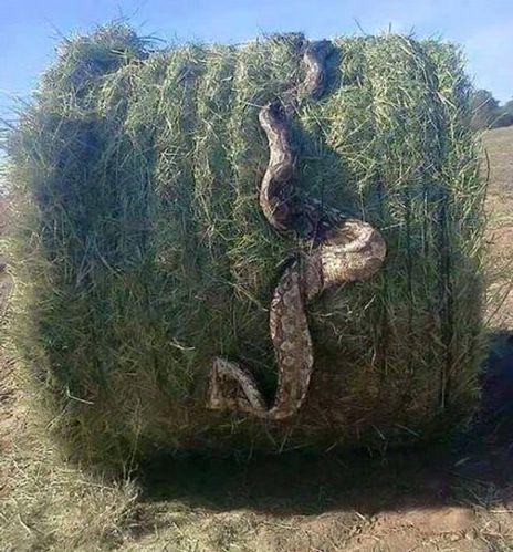 As redes sociais son un niño de mentiras. Un exemplo próximo: a serpe de tres metros que se dixo que aparecera en Arteixo, cando a foto realmente foi tomada na Arxentina