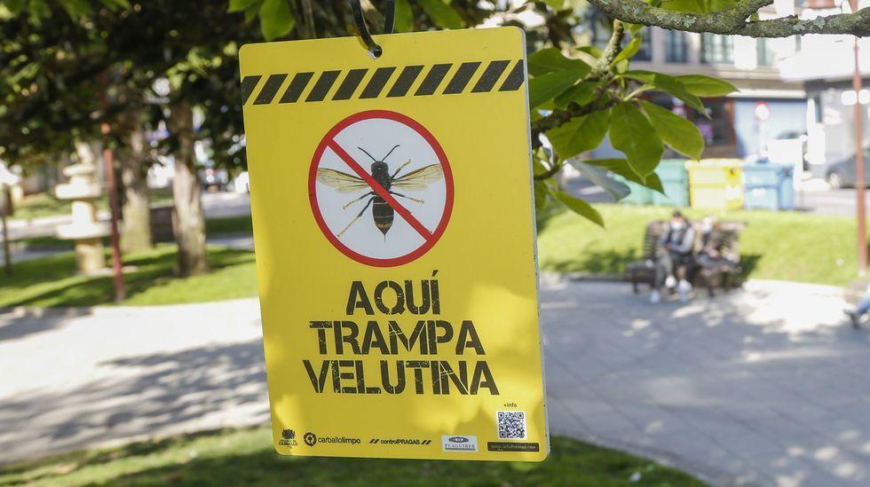 Un apicultor coloca trampas para velutinas junto a sus colmenas en Lugo