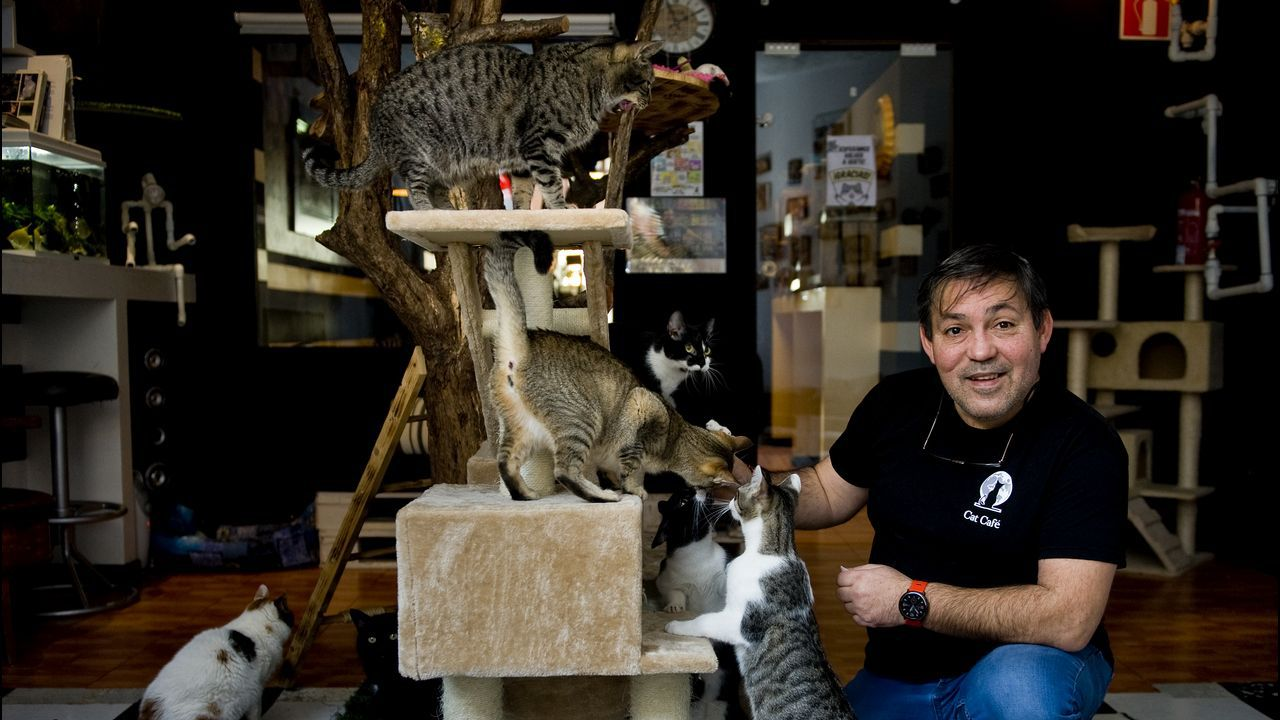 Con la patrulla del cariño.Pedro Soto, del Cat Café, en el municipio de Cambre, con los gatos.