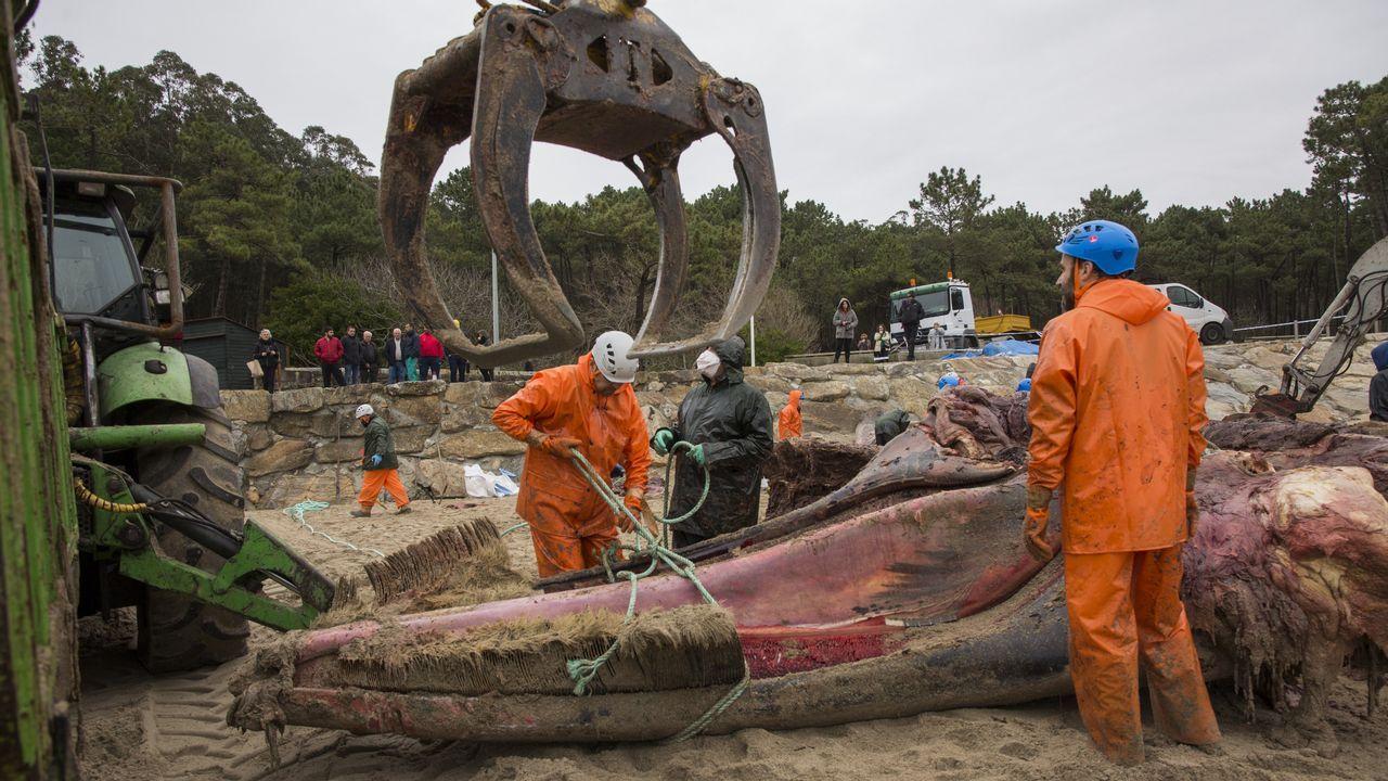 Comienza la retirada de la ballena varada en la playa de Balarés.Un vigilante de la cofradía de Corme, ayer, en el entorno de Niñóns.