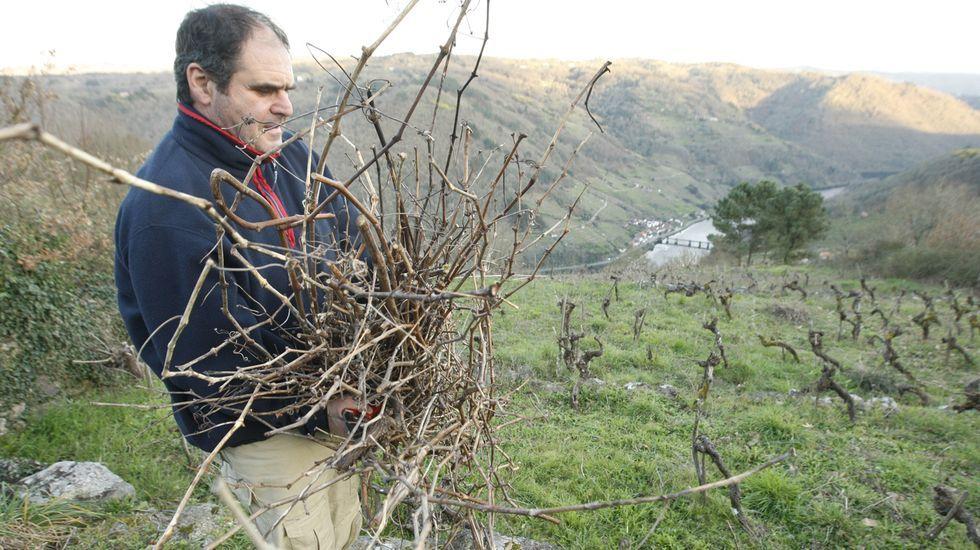 Un viticultor retira los restos de la última poda en una viña de la ribera de Chantada