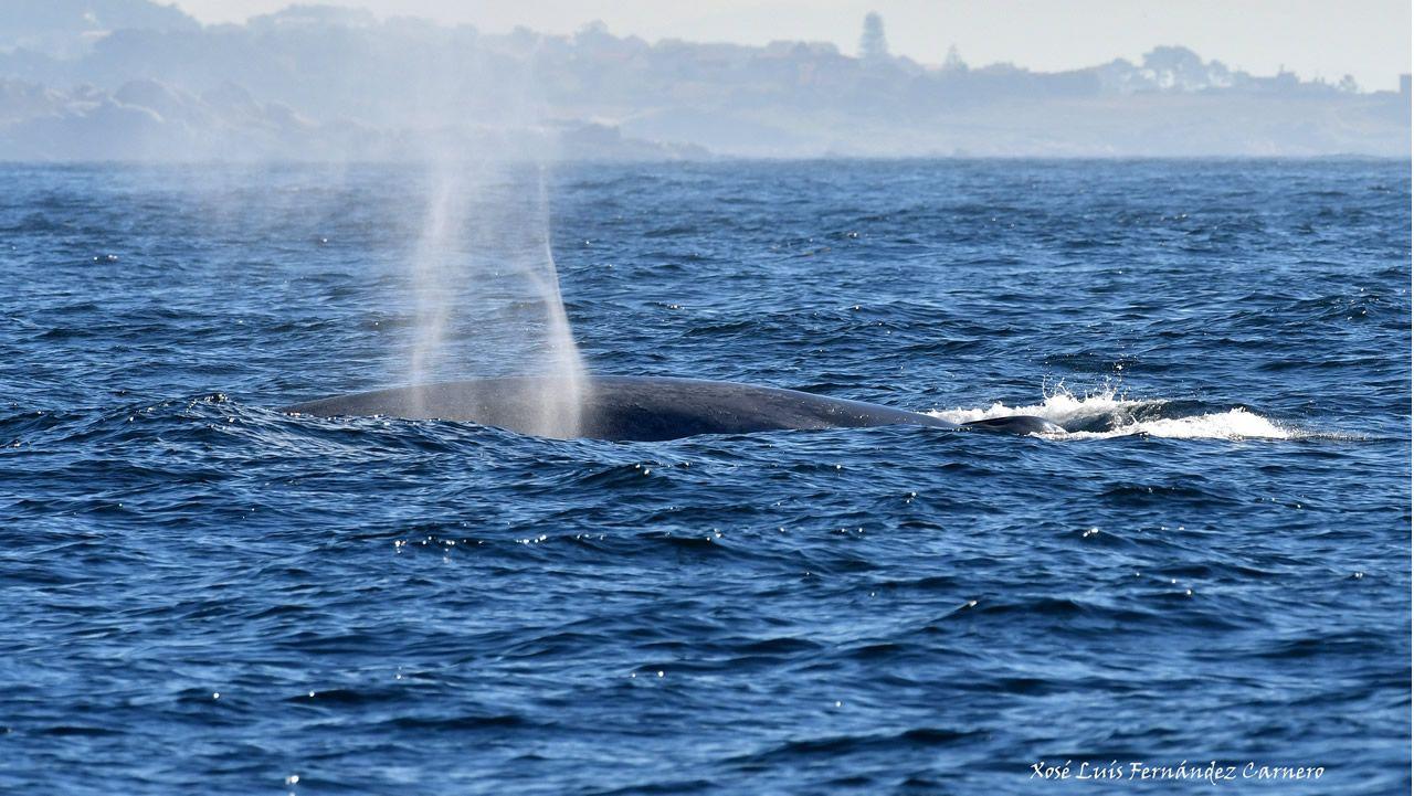 Madre e hija, dos ballenas azules, podrían estar alimentándose