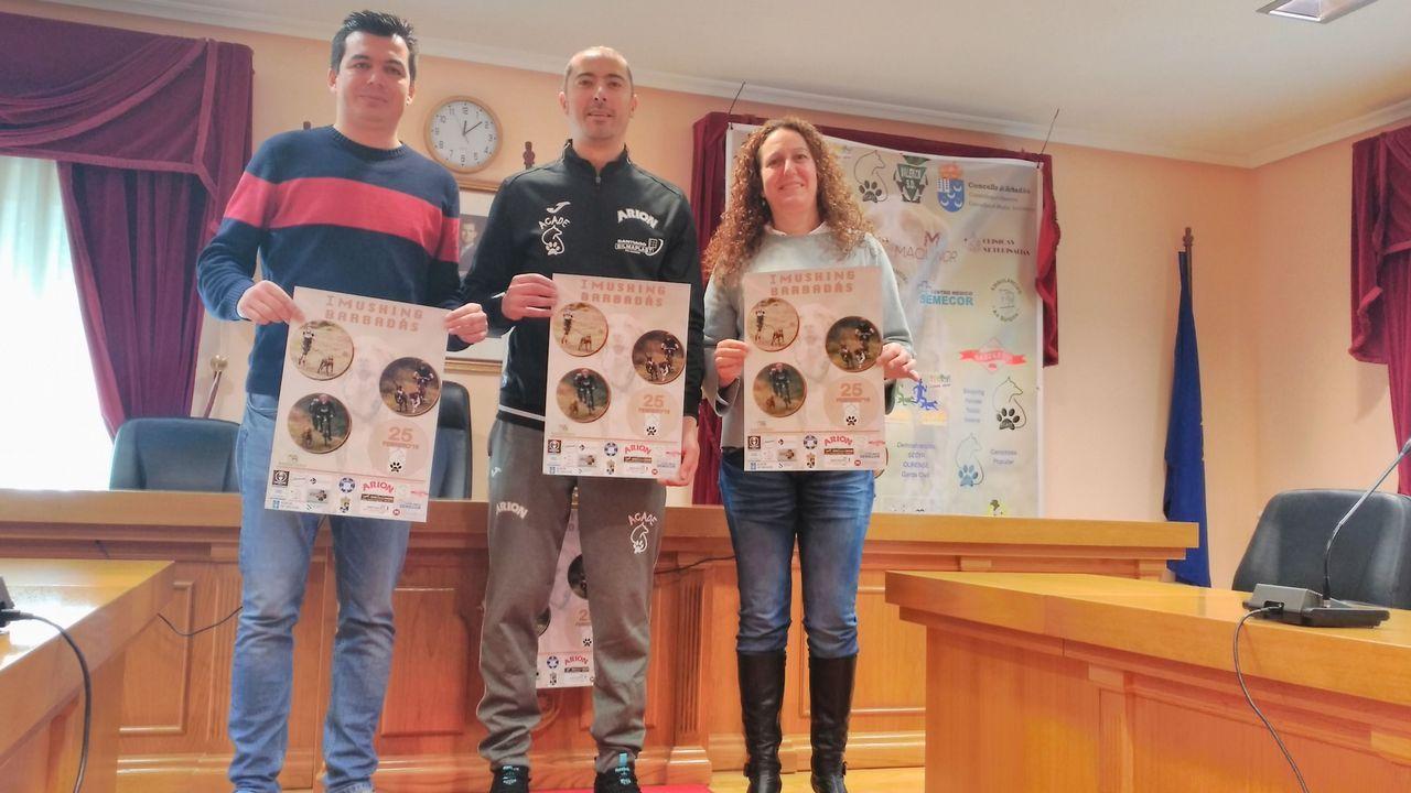 Prueba del campeonato gallego de mushing en Vilagarcía