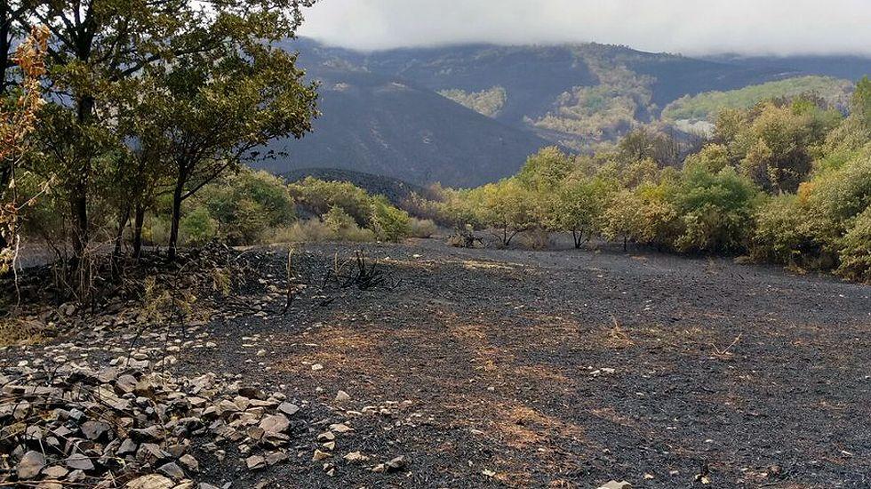 Estado en el que quedaron los montes de Degaña tras los incendios.Estado en el que quedaron los montes de Degaña tras los incendios