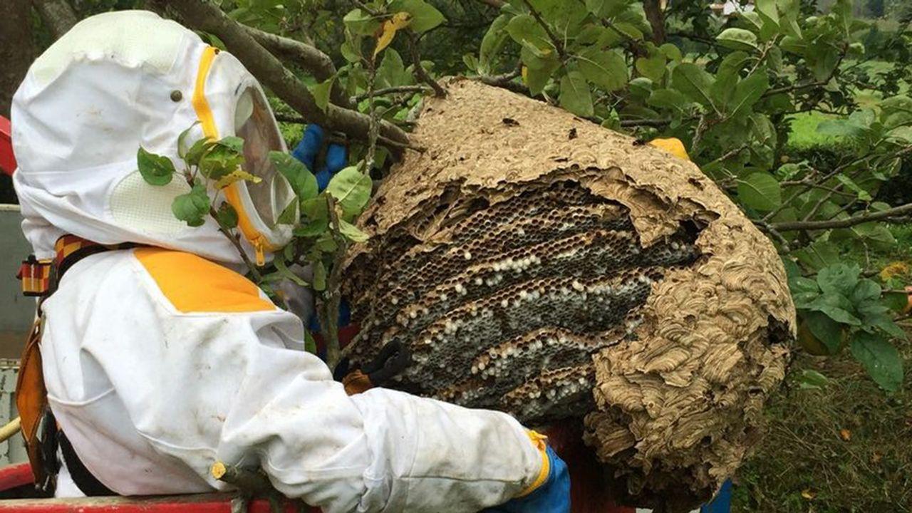 Alumnos de Reboreda se conciencian sobre los residuos.Retiran un nido de avispa asiática