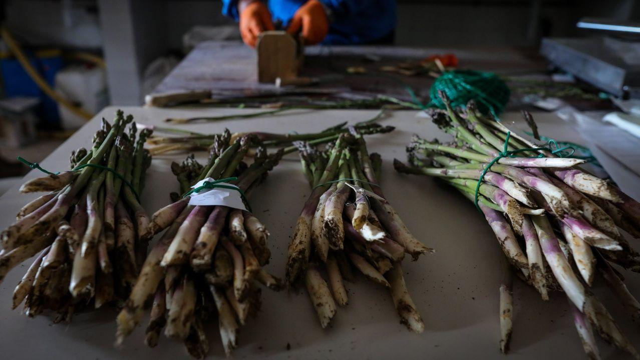Un agricultor separa en foto de archivo manojos de espárragos para enviar al mercado